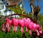 Flowers in the gardan
