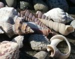 Shells at Eli and Tore's veranda