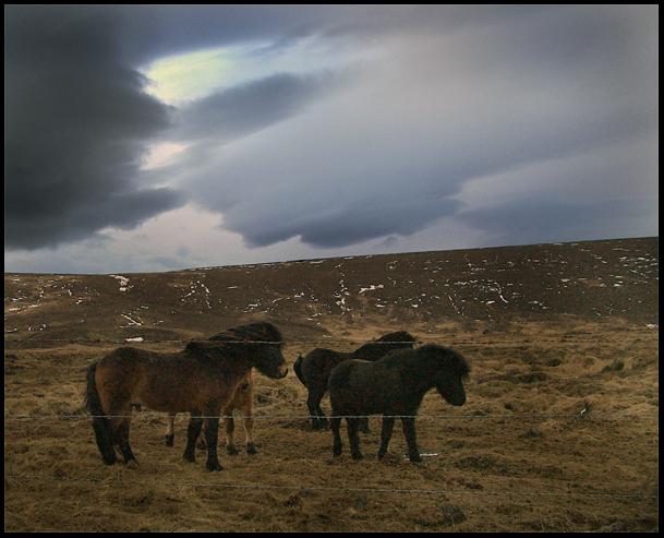 Himininn og hestarnir